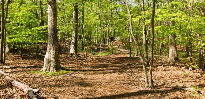Ressources Trail en Belgique-article-trail-belgique