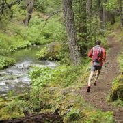 Trail runner in de woods - coureur dans les bois - loper in de bos